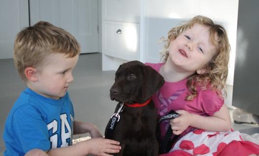 Blog - cute family dog